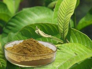 EcoDepotiN ~ Polvo de hoja de guayaba seca, (Psidium guajava), polvo orgánico de hojas, hojas secas para té, (50 g)