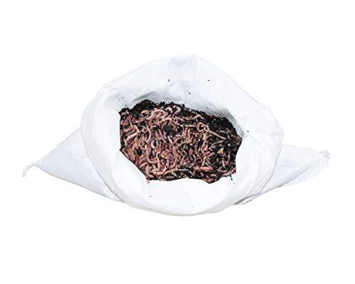 Angelwürmer, Futterwürmer, Regenwürmer - 0,5 Kg mittlere (ca. 400 Stück)