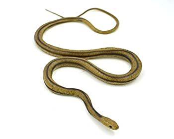 MameJo Lifelike Rubber Replica Yellow Rat Snake 48  Action Figure