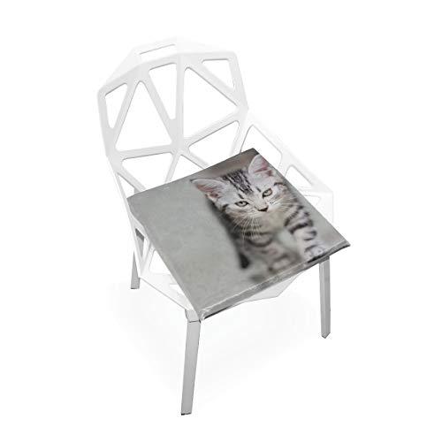 Enhusk Sommer Stuhl Kissen Nette Amerikanisch Kurzhaar Katze Kätzchen Mit Textfreiraum Weiche rutschfeste Memory Foam Stuhlkissen Kissen Sitz Für Home Küche Schreibtisch 16x16 Zoll Pad Sitzkissen