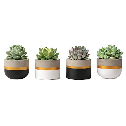 Mkouo 8cm Zement Succulent Pflanzen Modern Concrete Kaktus Blumentöpfe Small Clay Innen Herb Window Box Container for Home and Office Decor, Set of 4