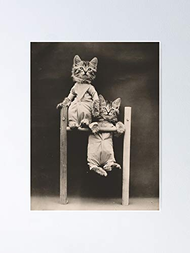 AZSTEEL Hang In There Two Kittens On Chin Up Bar Poster | No Frame Board For Office Decor, Best Gift Family And Your Friends 11.7 * 16.5 Inch