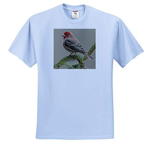 3dRose Danita Delimont - Birds - Male House Finch in Winter - Youth Light-Blue-T-Shirt Small(6-8) (ts_345311_60)