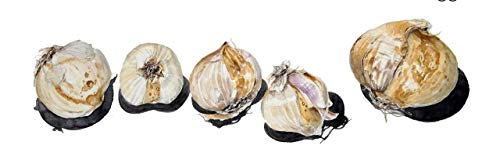 bulbes de freesia vrai, fleur freesia, intérieur Pot Fleurs Orchidées, Freesia Rhizome bulbes de fleurs, floraux maison tranquille jardin plante-2bulbs