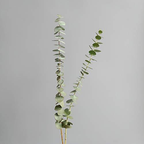 Ramas de eucalipto natural secas, 12 ramas con hojas, ideales para arreglos florales de bodas o decoración del hogar