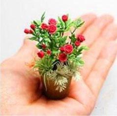 Nouveaux produits 100pcs 4 variétés de roses Mélange de graines rares Bonsai Mini arc-en-Graines de fleurs belle plante pour le bricolage jardin