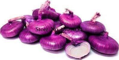 Shopvise 50pcs / Sac géant oignon vert doux espagnol Graines Légumes Germination 95% onion Semences pour Garden Seeds: 15