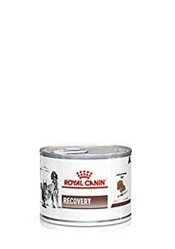 ROYAL CANIN Veterinary Diet Recovery Nourriture pour Chien/Chat