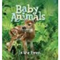 By Editors of Kingfisher Baby Animals In the Forest (Brdbk) [Board book]