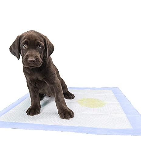 RESTAR Empapadores de Entrenamiento para Perros Gatos Perfumes con Feromonas para Atraer los Cachorros y Simplificar el Entrenamiento Producto Mascotas (40X60CM, 50PSC)