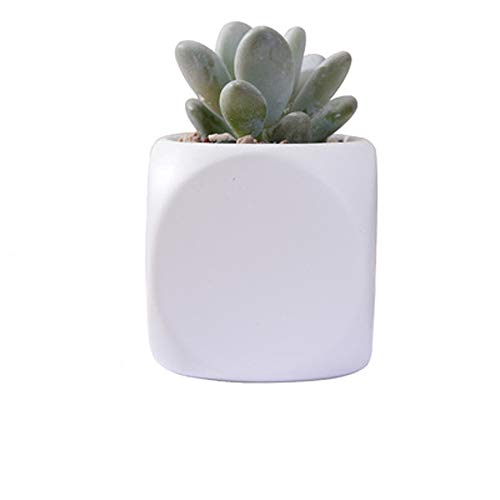 Tritow Ensemble De 1 Pot De Fleurs En Porcelaine Mat Mini Cube Succulent Plant Pots Pot De Fleur En Céramique Bonsaï Planteurs Blanc Protection De L'environnement Pot En Pot