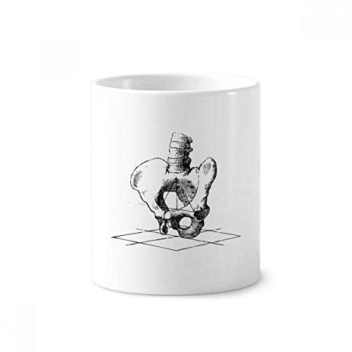DIYthinker Hip Wirbelsäule Menschliches Skelett Skizze Zahnbürste Stifthalter Tasse Weiß Keramik Tasse 12 Unzen 4 Zoll hoch x 3 Zoll Durchmesser Mehrfarbig