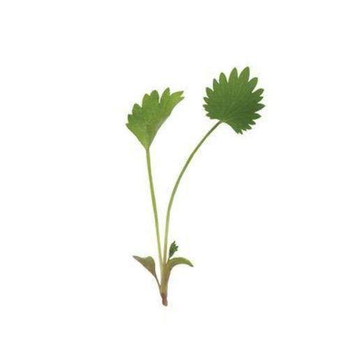 Semi organici: 20+ Seeds: Anice Verde Micro Seeds + LIBERO Bo 6 Varietà Seed Pack - A $ 30 Vue! by Farmerly