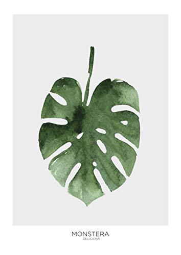 Desconocido LÁMINA BOTÁNICA Monstera - póster Plantas