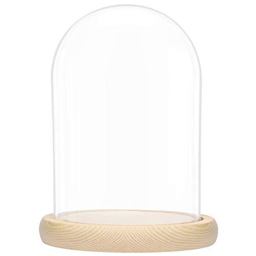 BELLE VOUS Glaskuppel Groß Bild
