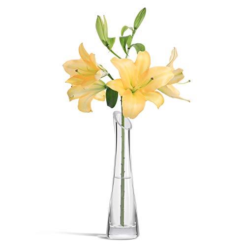 ComSaf 24CM Jarrón de Vidrio para Flor y Plantas, Decorativo Florero de Cristal Transparente de la Oficina en Casa