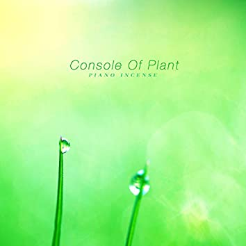 Console Of Plant