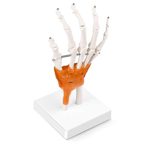 LYOU Human Hand Joint Model, Life Size Flexible Right Hand and Wrist Skeleton Model with Articulated Joints and Ligaments, Mount on Base