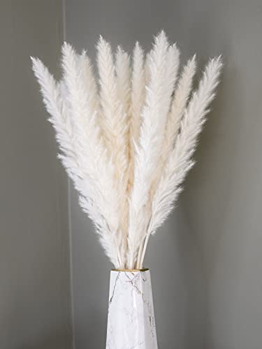 Boholife® Pampasgras getrocknet - EIN BLICKFÄNGER in deiner Wohnung - Trockenblumen, Boho deko, Deko Badezimmer & Deko Wohnzimmer