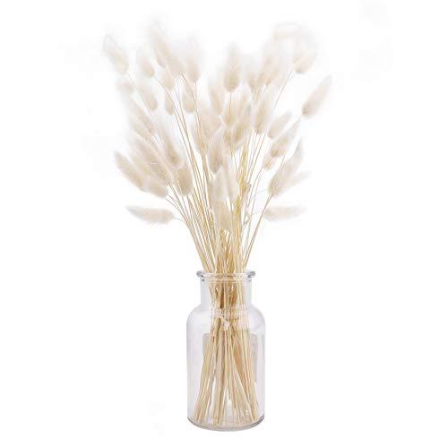 60 piezas de colas de conejo blanco pampas hierba planta grande blanco natural seco Lagurus Ovatus pampas hierba arreglos florales boda decoración del hogar