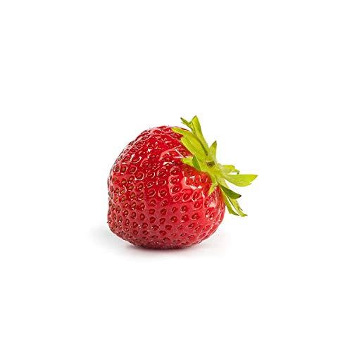 Erdbeerprofi - Erdbeere Mara de Bois - 10 Erdbeerpflanzen/Erdbeersetzlinge - gut durchwurzelt, immertragend - Pflanzzeit: August - September; Ernte: Juni-Oktober