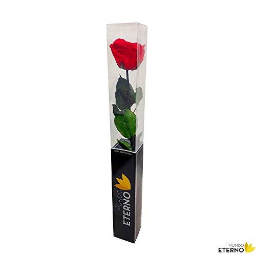Mundo Eterno Rosa Eterna Preservada 55cm Roja