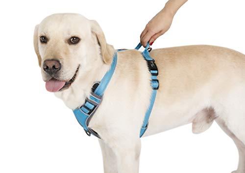 PETTOM -   Brustgeschirr Hund