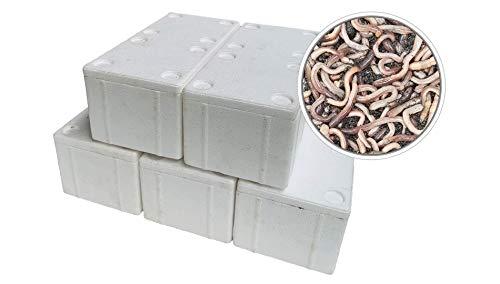 SUPERWURM 250 Stück Kanadische Tauwürmer in der Styroporbox - inkl. 5 Coolpacks - Angelköder
