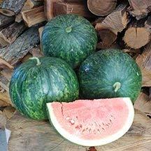 10 graines de Sweet TRN114 Wilson