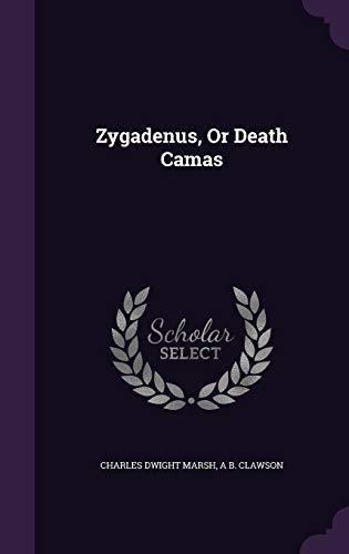 Zygadenus, or Death Camas