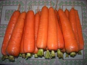Potseed graines graines de Carotte de légumes Carottes FamilyGinseng L'emballage d'origine Environ 50 graines