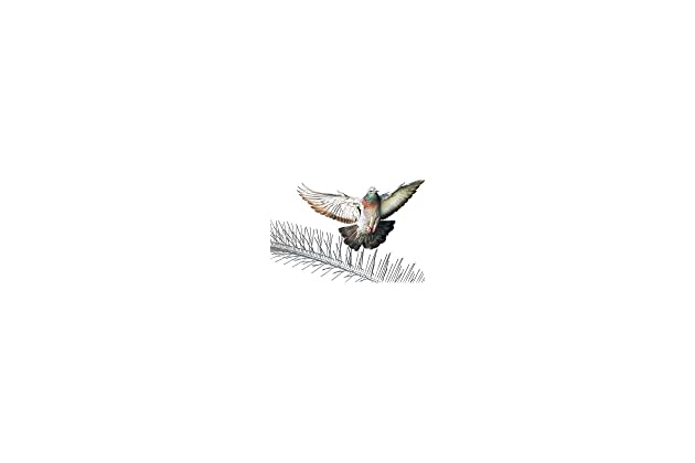 Best spike strips for birds | Amazon com