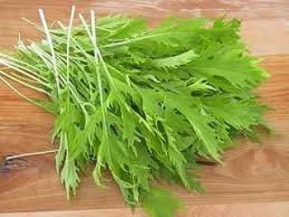 USA Seller! Mizuna Mustard Seeds Heirloom NON-GMO 250 Free Shipping