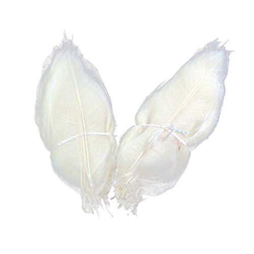 EXCEART 100 Stück Skelettblätter Getrockneter Gummibaum Natürliches Blatt Probe Lesezeichen DIY Bastelbedarf für Sammelalbum Karte Hochzeitseinladungen (Weiß)