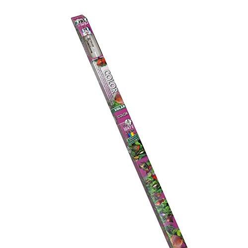 JBL 6162500 Solar-Leuchtstoffröhre für intensive Farben in Süßwasseraquarienn, Solar Color T8, 38 W