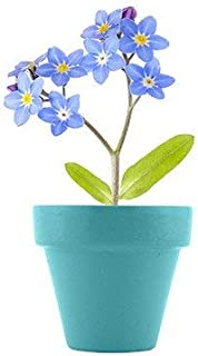 Best forget me not flower fairy Reviews