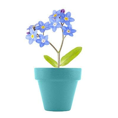 Spring Garden (Bonus POG Exclusive Fairy) Mini Grow Your Own Pot Kit Instant Plant Seeds Plant Outdoor & Indoor Forget ME NOT