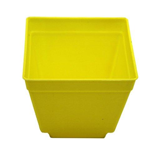 Adhere To Fly Lot de 10 pots de fleurs carrés en plastique pour intérieur Jaune 10 cm