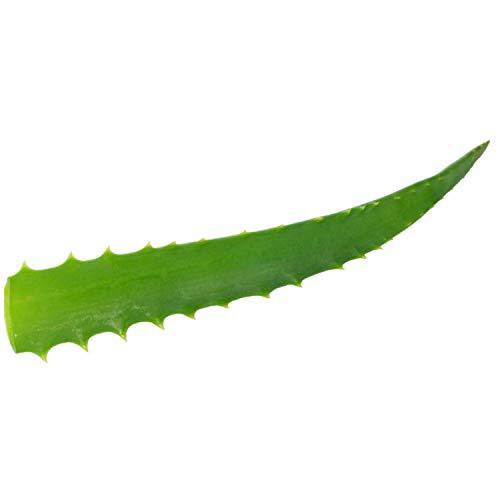 VONDERWEID - Bio Aloe Arborescens Blätter, Made in Italy, aus Bio-Pflanzen im Alter von 5 Jahren, Heilpflanze nach Pater Zagos Rezept (1)