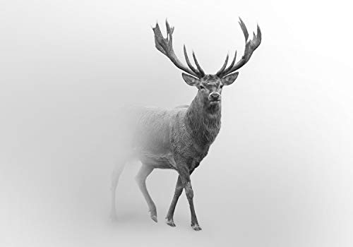 wandmotiv24 Fototapete Hirsch im Nebel, XL 350 x 245 cm - 7 Teile, Fototapeten, Wandbild, Motivtapeten, Vlies-Tapeten, Tier Grau M5910
