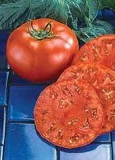 Tomato Beefmaster seeds