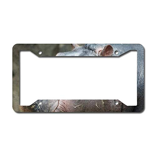 Library design Your License Plate Frame Auto Truck Car Front Tag Personalized Metal License Plate Frame 6'x12'. Hippopotamus Photo