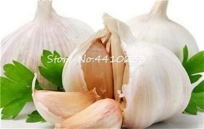 SVI Fresh 100 semillas vegetales Pcs ajo para plantar Blanco 1