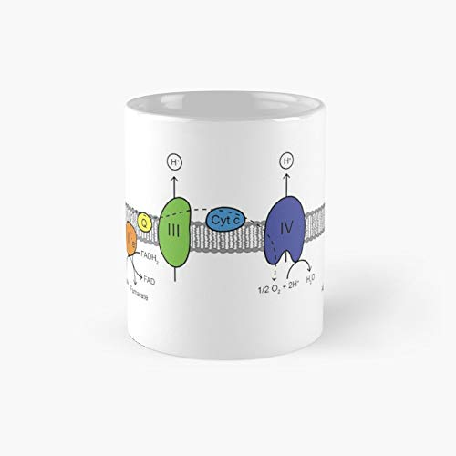 Electron Transport Chain Classic Mug Best Gift Funny Coffee Mugs 11 Oz