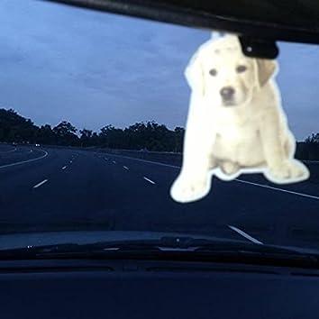 Desert Dog Rd