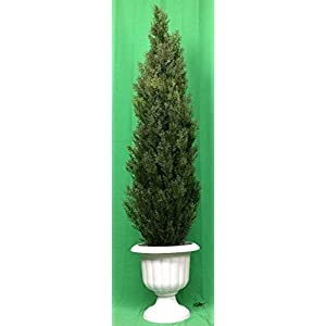 """Silk Flower Arrangements Artificial UV Rated Outdoor 64"""" Cedar Topiary Tree with Md Sandstone Urn, by Silk Tree Warehouse"""