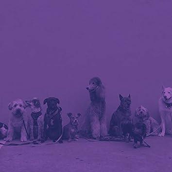 純粋(犬の訓練)