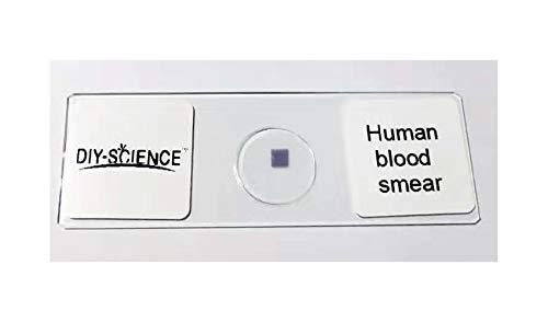 Human Blood Film Slide, Smear, Wright's Stain, Prepared Microscope Slide