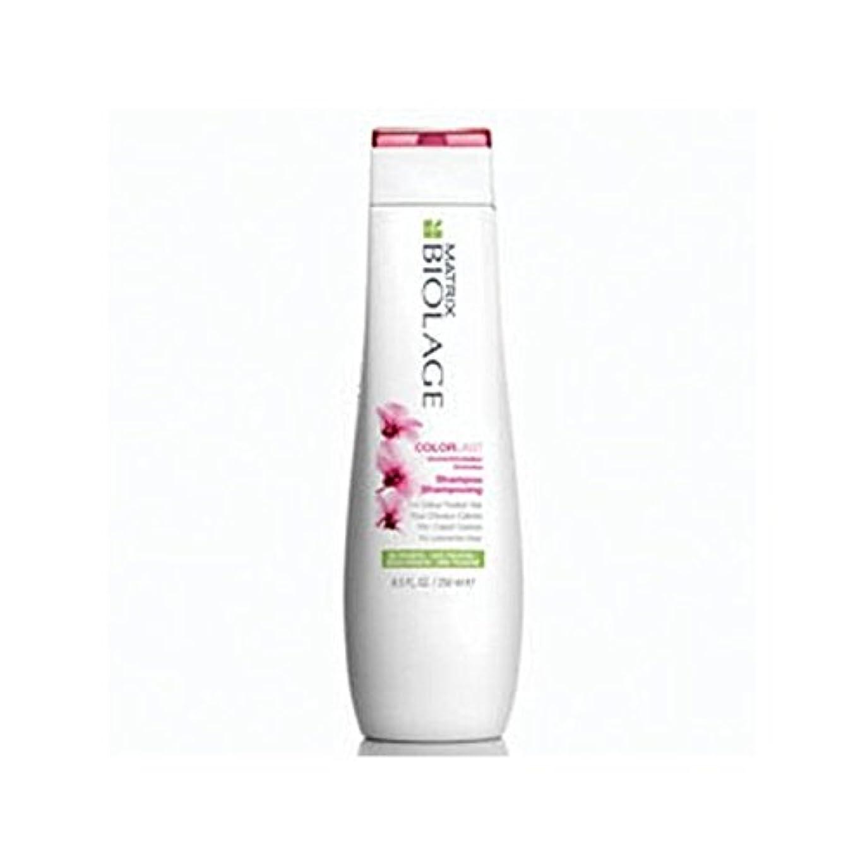 花に水をやる騒乱切り刻むMatrix Biolage Colorlast Shampoo (250ml) (Pack of 6) - マトリックスバイオレイジのシャンプー(250ミリリットル) x6 [並行輸入品]