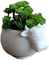 ceramic cow planter
